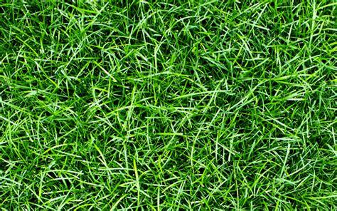 Gras Mulchen by Gras Als Mulch De Tuin Op Tafel
