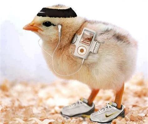 cute hen themes 40 cute and funny chicken pictures that will make your day