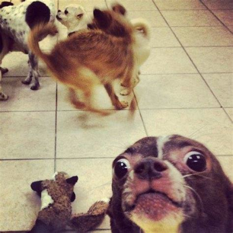 Most Hilarious Animals by 41 Of The Most Hilarious Animal Photobombs That Happened