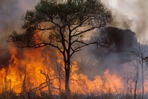 fao news article the wildland problem