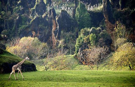 imagenes unicas de la naturaleza parque de la naturaleza de cab 225 rceno cantur cantabria