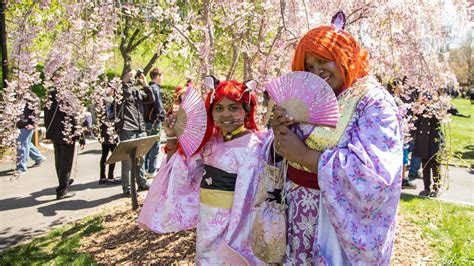 cherry blossom festival matsuri cherry blossom festival in nyc