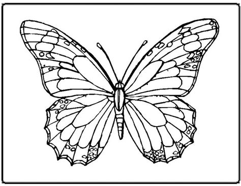 Coloring Pictures Free Butterfly Pictures To Print by Coloring Pictures Free
