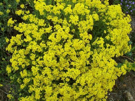 fiori giardino perenni piante erbacee perenni piante perenni caratteristiche