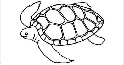utee tattoos turtle outline picture outline pictures