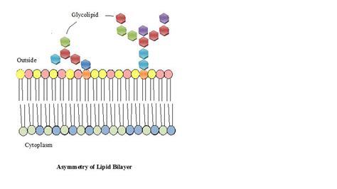 structural biochemistrylipidsmembrane lipids wikibooks