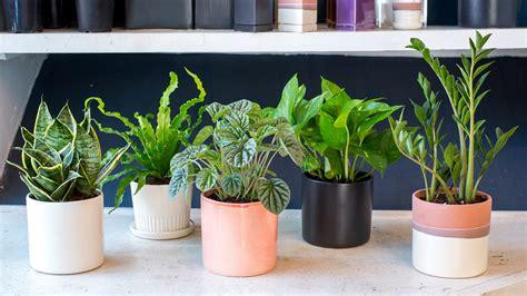 indoor houseplants   kill