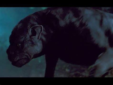 los macabros encuentros con perros negros del diablo