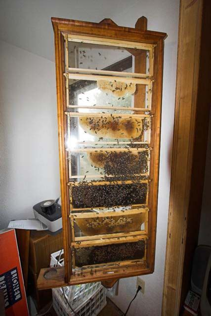 building   observation hive archive beesource