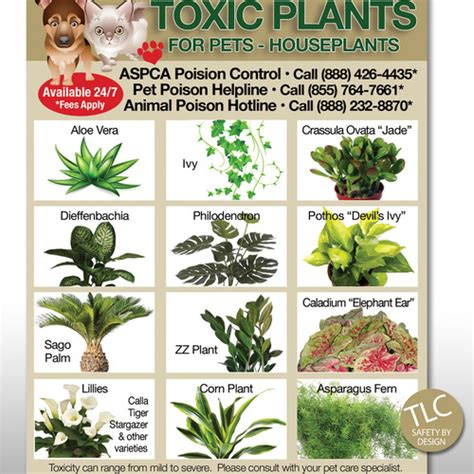 what plants are poisonous to dogs tlc safety by design toxic plants flowers pets dog