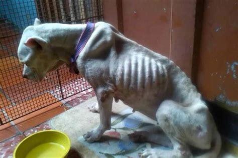 imagenes de animales maltratados perros maltratados auto design tech