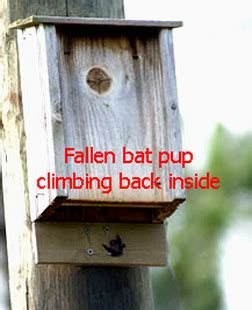 how to make a bat house bat houses wild things sanctuary