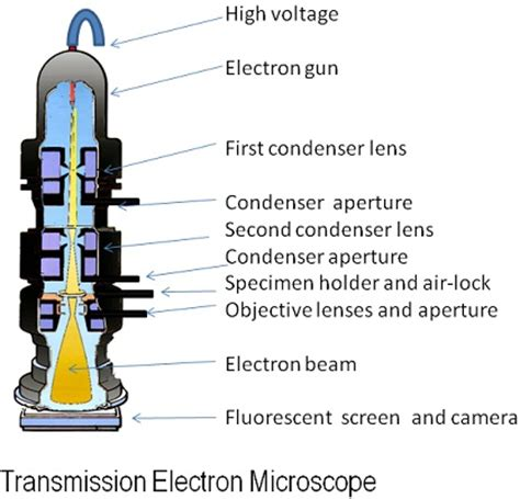 Difference Between Light Microscope And Electron Microscope by Difference Between Light Microscope And Electron Microscope