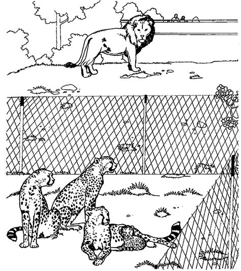 cheetah coloring pages baby cheetah for coloring pages coloring home