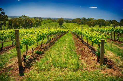 mclaren vale winery experience adelaide s top food and