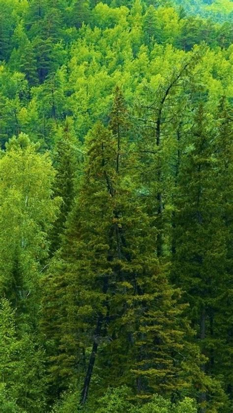 siberia autumn nature  widescreen background awesome