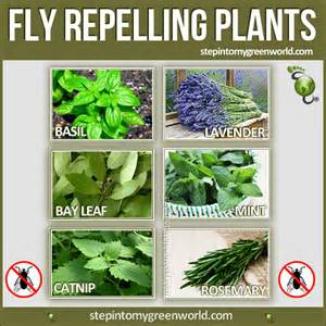 the top 6 fly repelling plants for your home and garden