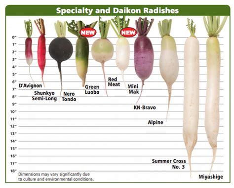 Dw Paket Dw094 Type J radish specialty daikon varieties planting program johnny s selected seeds