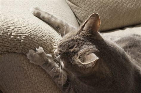 sofa that cats won t scratch tips on how to pick furniture your cat won t scratch