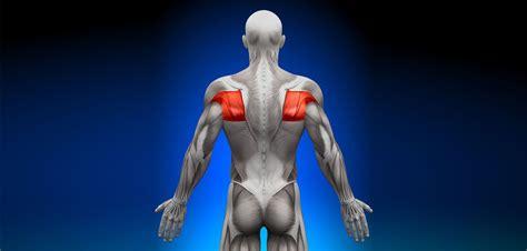 golf swing biomechanics anatomy teres minor muscle golf loopy play your golf like a