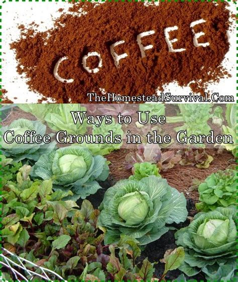 coffee grounds vegetable garden unique coffee grounds in vegetable garden coffee grounds