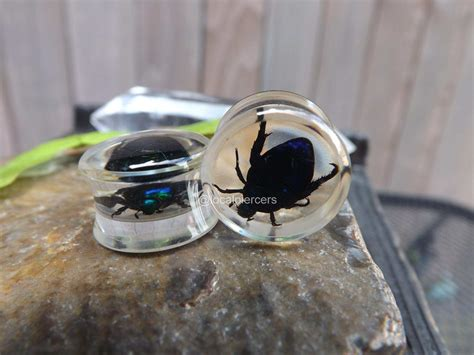 are bed bugs real beetle plugs 5 8 real bug plug double flared glass egypt scarab gauge clear resin