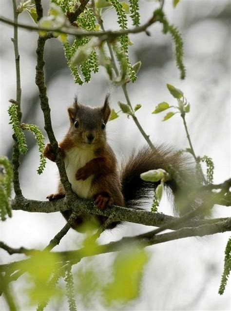 images   squirrel people  pinterest