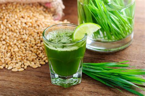 erba di grano propriet 224 nutrizionali benefici uso e