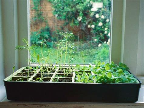 indoor edible gardens herb planters apartment therapy create your indoor herb garden today