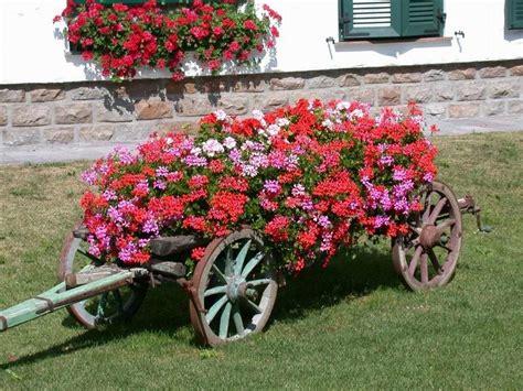 fiori da giardino primavera estate geranio parigino