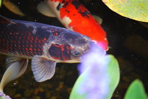 Aquascape Pondless Waterfall Building A Fish Pond Is Harder Than You Think Let Us Help