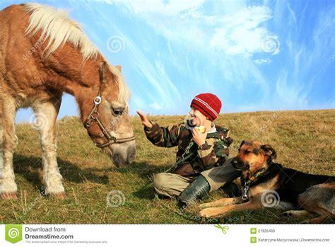 caballo y muchacho el muchacho caballo y perros foto de archivo imagen 21926490