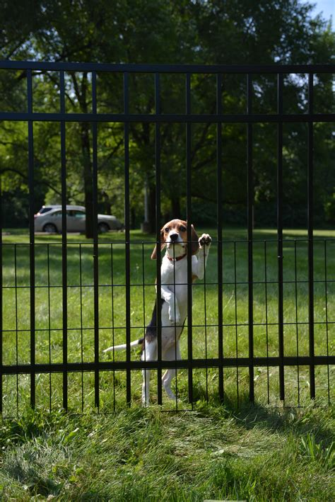 how to keep dog in yard without fence faq jerith aluminum fence