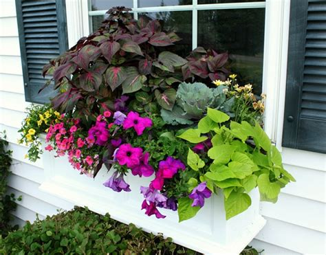 window box plants for sun cottage flavor window boxes abloom