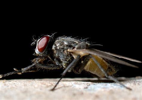 Backyard Fly by Outdoor Filth Flies Raid 174 Bug Id Raid 174 Brand Sc Johnson