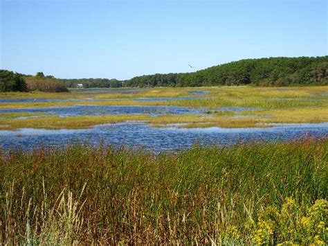 best place to stay cape cod wellfleet bay wildlife sanctuary best places to stay