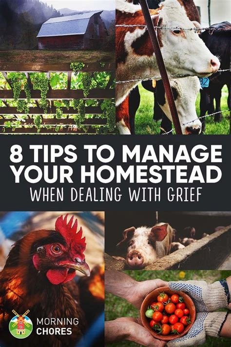 8 Tips For Dealing With Hayfever by 8 Tips To Help You Manage Your Homestead When Dealing With
