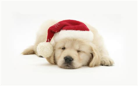 cute dog wallpapers wallpaper wallpapers pinterest dog free download christmas pets hd wallpapers in 1280x800