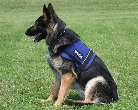 of service dogs service dogs vests and harnesses breeds picture