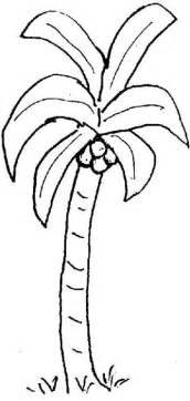 palm tree coloring picture palm tree to color