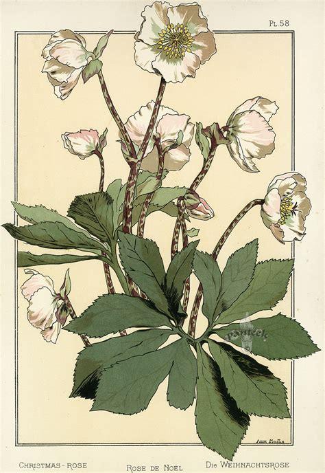 botanical lithograph grayscale coloring book books eugene grasset pochoir prints 1896