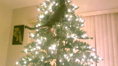 cats knocking over christmas trees cats vs trees a gif collection