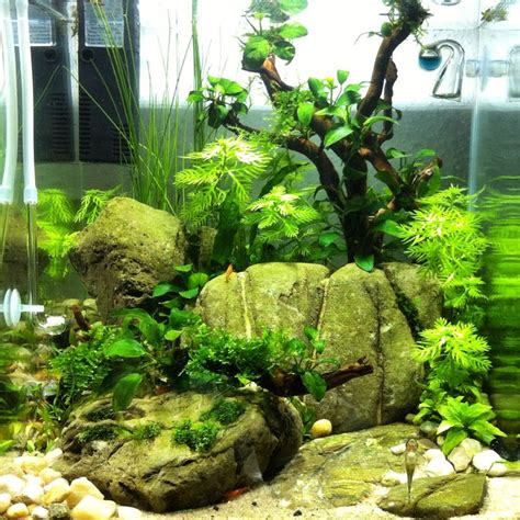 aquascaping tanks 30l cube aquascaping pinterest aquarium aquascaping