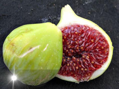 best fig fig varieties of wolfskill orchard davis california