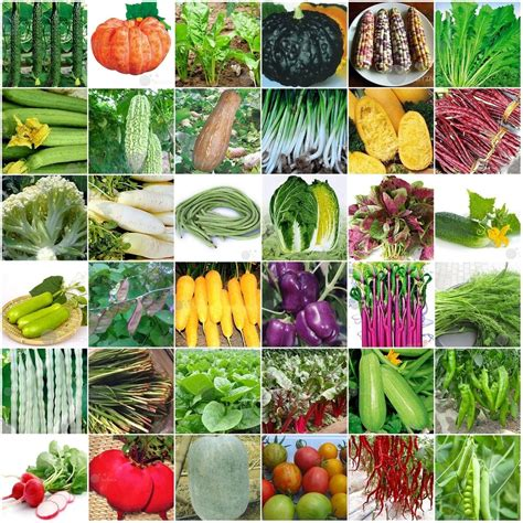 60kinds Heirloom Garden Vegetable Seed Non Gmo Seeds Bank Seeds For Vegetable Gardens