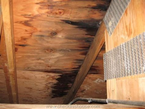 Black Mold In Attic - attic black mold and why is it growing in your attic