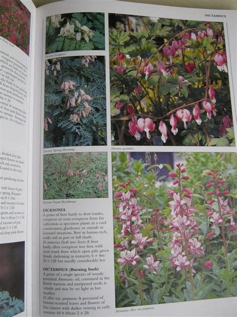 Encyclopedia Of Garden Plants And Flowers Other Gardening Plants Encyclopedia Of Garden Plants And Flowers Lance Hattatt Was Sold For