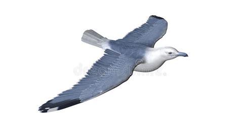 bird flying stock photography image 35166552