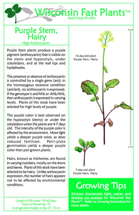 medicinal plants research papers bibme free bibliography citation maker mla apa