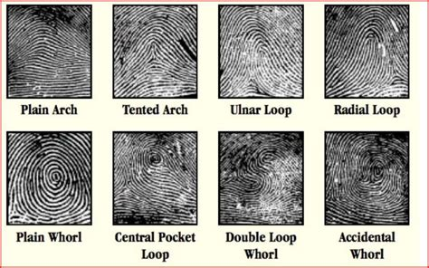 what does shape pattern mean if you have a spiral whorl fingerprint pattern this is